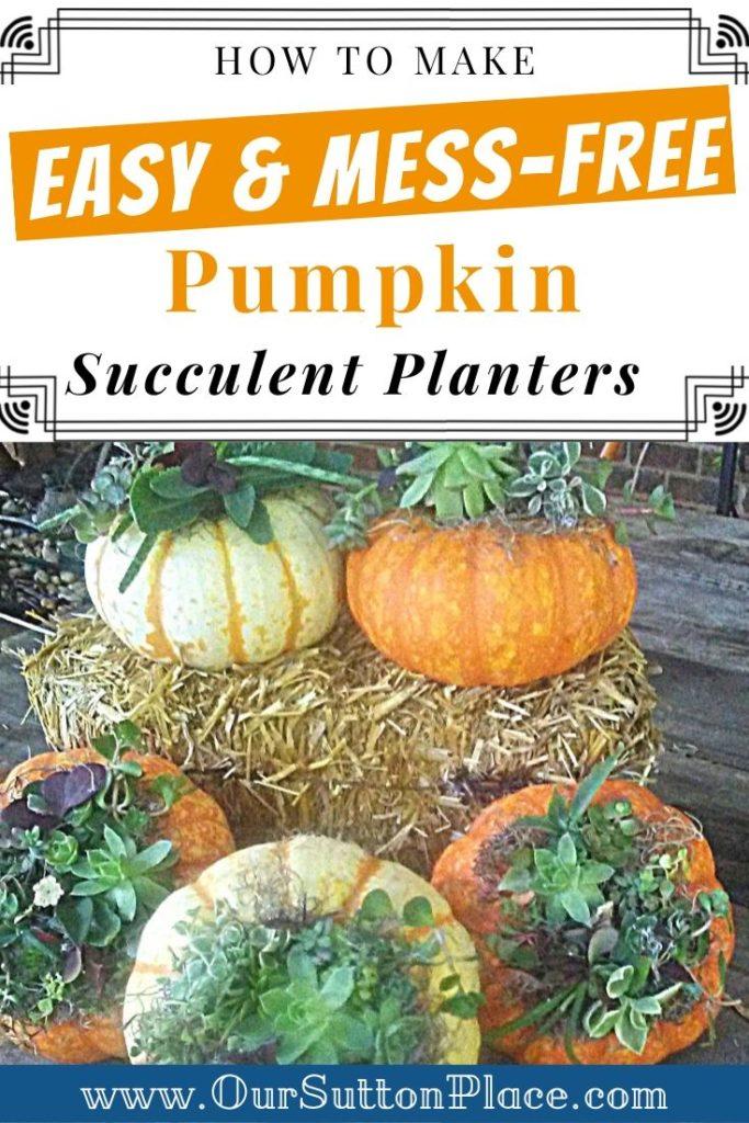 mess free pumpkin succulent planters