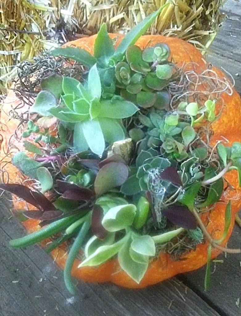 closeup of a pumpkin succulent planter