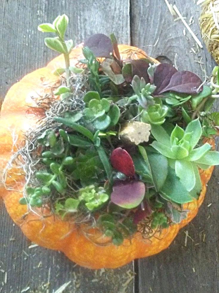single succulent pumpkin planter