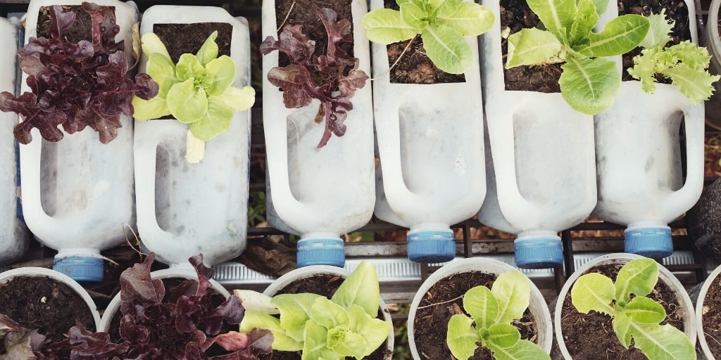 reusing milk containers for gardens
