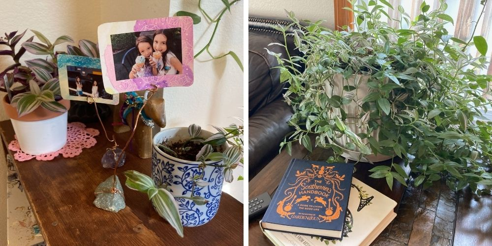 two pictures of my houseplants.