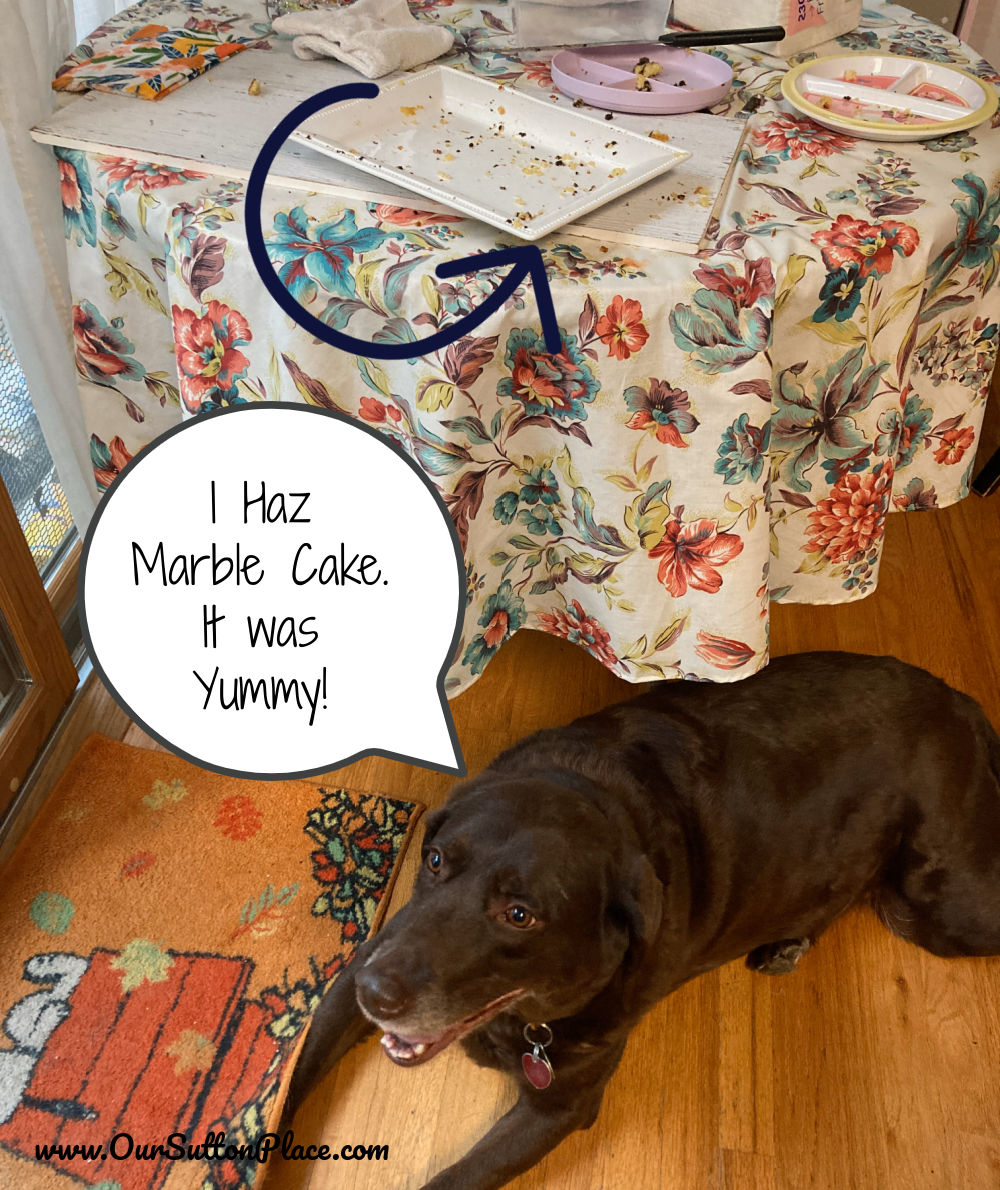 chocolate lab in front of empty plate (after having eaten the cake)