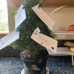 Bucket List Rosemary Christmas Tree