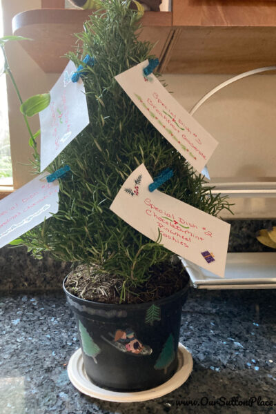 Bucket List Rosemary Christmas Tree