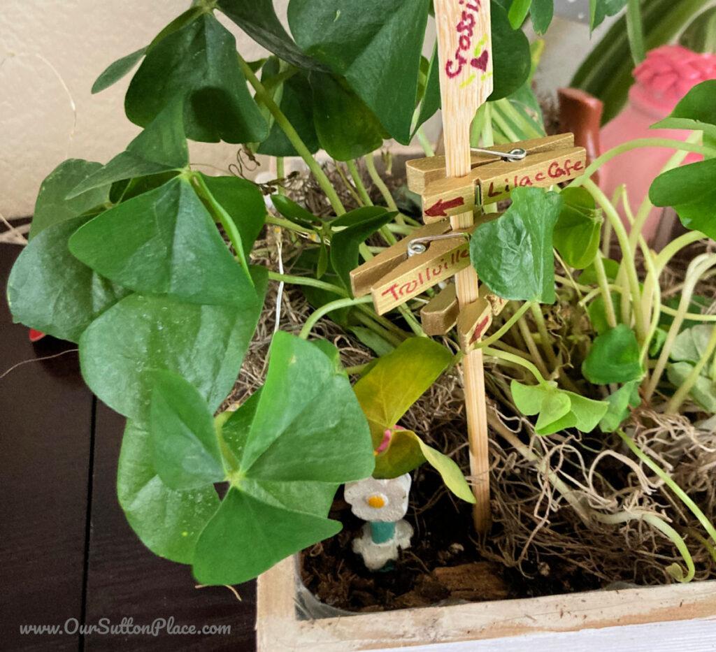 fairy garden made with shamrocks
